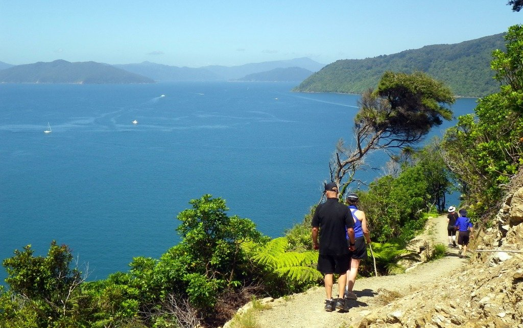 Enjoy well-formed trails on the Queen Charlotte Track
