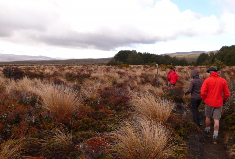 Great Walks Bush hiking Tongariro
