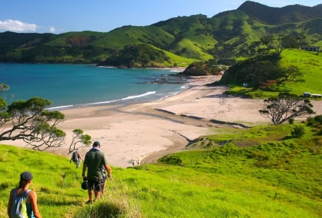 Hiking NZ North Island Guided Hike